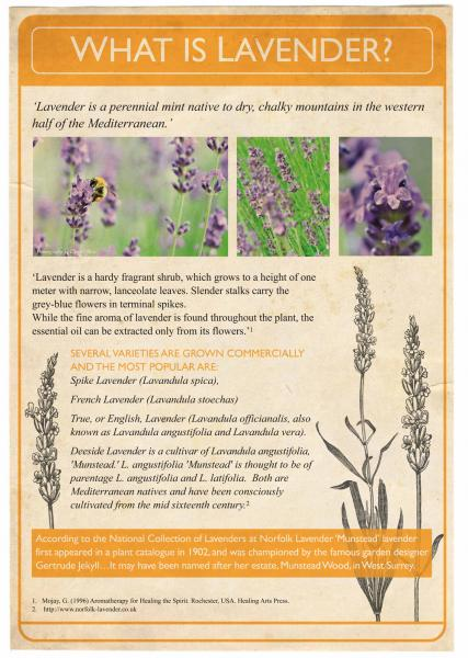 August 2013. The Lavender Project. Poster 2.